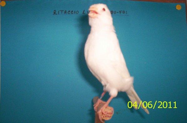 ALBINO N. 54 - 2011