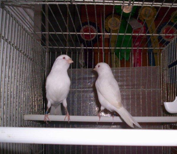 ALBINI REC. 2011
