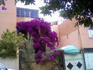هنا يقطن رئيس رواد الأغنية الأمازيغية مجموعة أودادن  ( عبد الله الفوى ) بالحي المواطفين بإنزكان - مدينة أكادير