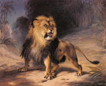 Lion D'atlas