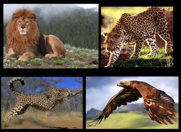 Animaux sauvages du Maroc