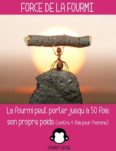 Force de la fourmi