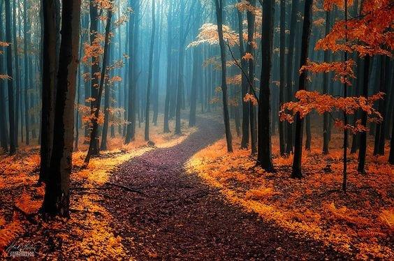 «Suis un chemin de bonté et tu voyageras avec un esprit clair» – Dan Goldberg