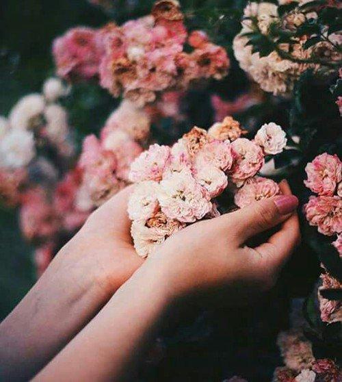 Si tu aimes une fleur