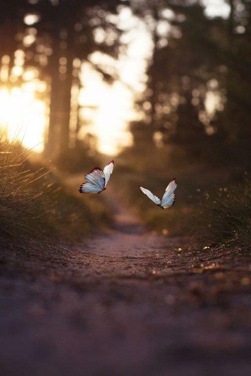 Le bonheur est comme un papillon