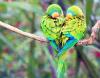 Un oiseau perché