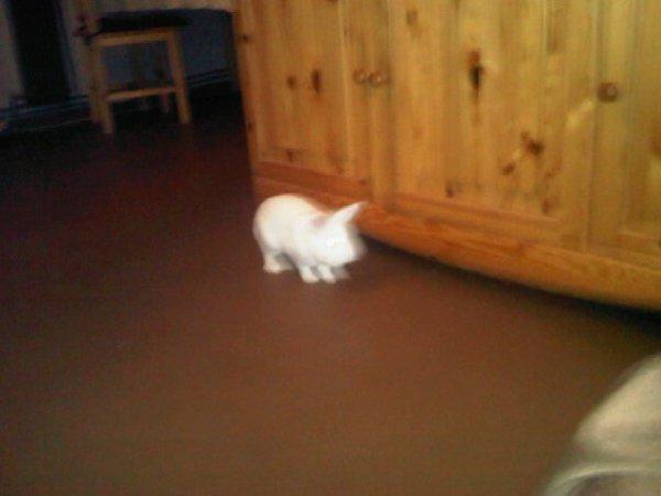 mon lapin panpan tu me manque repose en paix