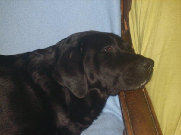 aurko qui fait sa sieste