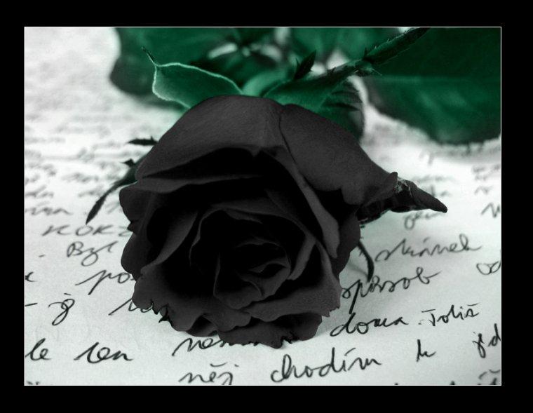La Rose Noir ..