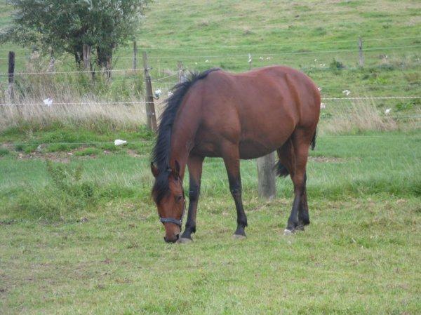 Trop souvent déçue par les hommes , je me réfugie auprès des chevaux.