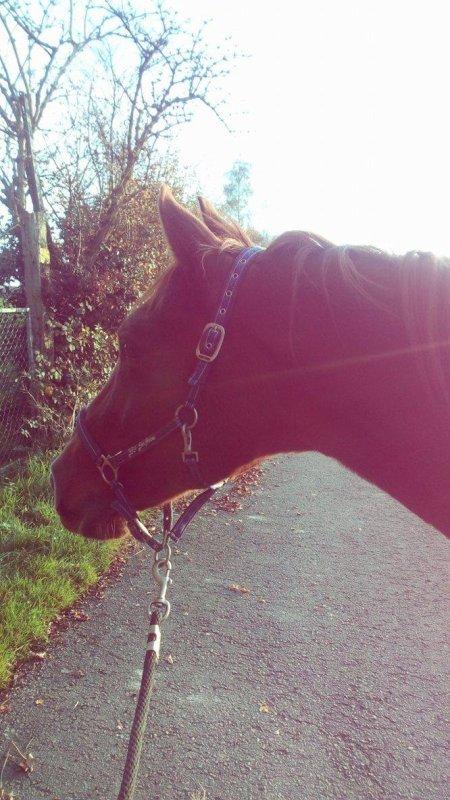 Un cheval têtue marche derrière vous, un cheval impatient marche devant vous , mais un noble compagnon marche à vos côtés.