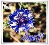 Sye-Photography