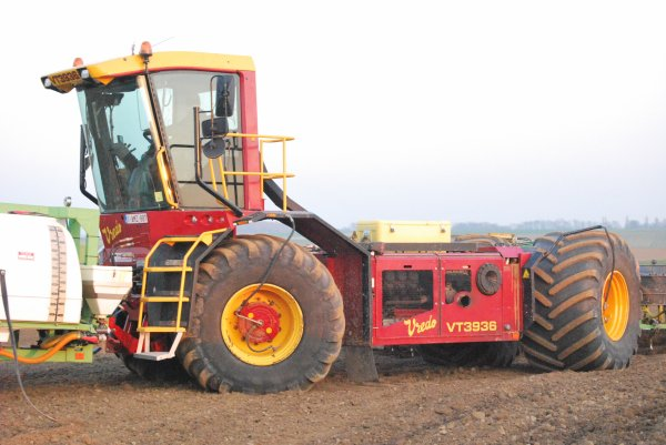 Plantation chicons fendt et vredo
