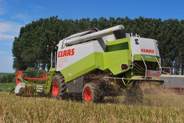 Claas Lexion 420 dans le Colza