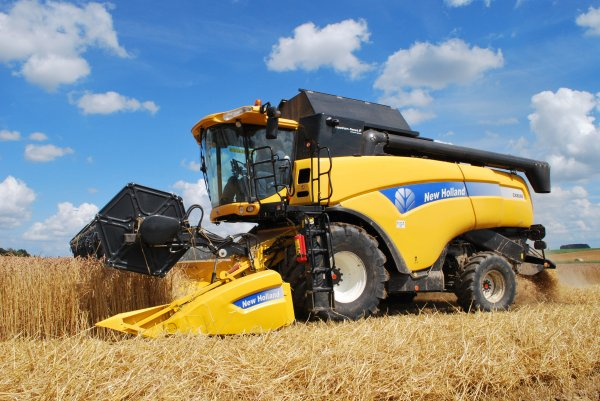 New Holland CX 8060 Dans l'épeautre