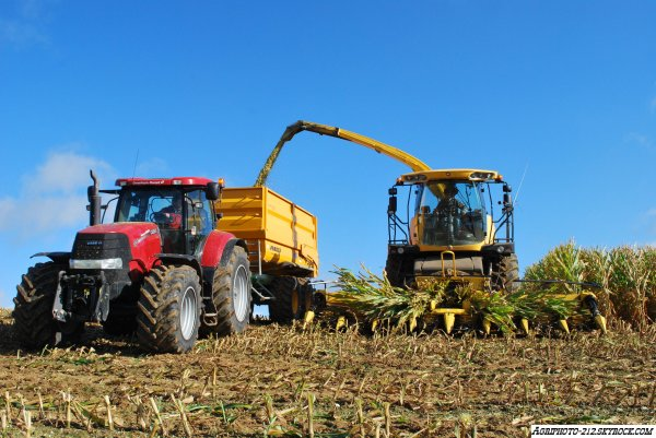 New Holland FR 9050 A L'ensilage De Maïs