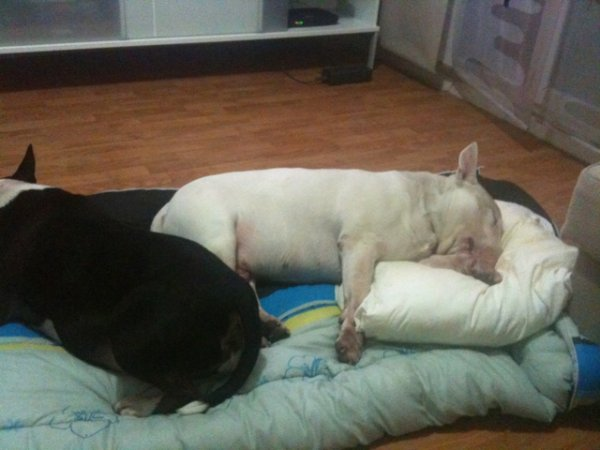 mes dogs:-)depuis le temps...