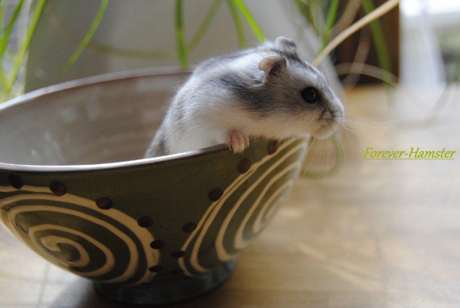 Blog de Forever-Hamster