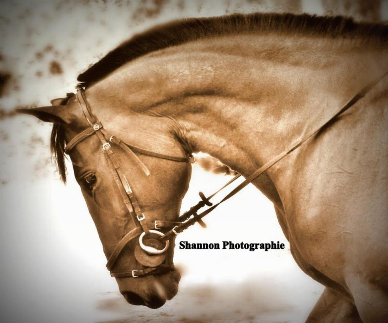 Le dressage est un art equestre ♥