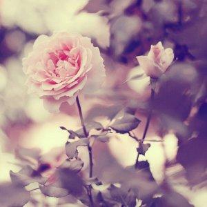 Parfois, une seule personne suffit pour changer toute notre vie, et de nous réapprendre à aimer
