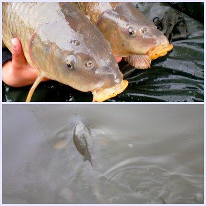 ptite matiné = 2 poissons suite