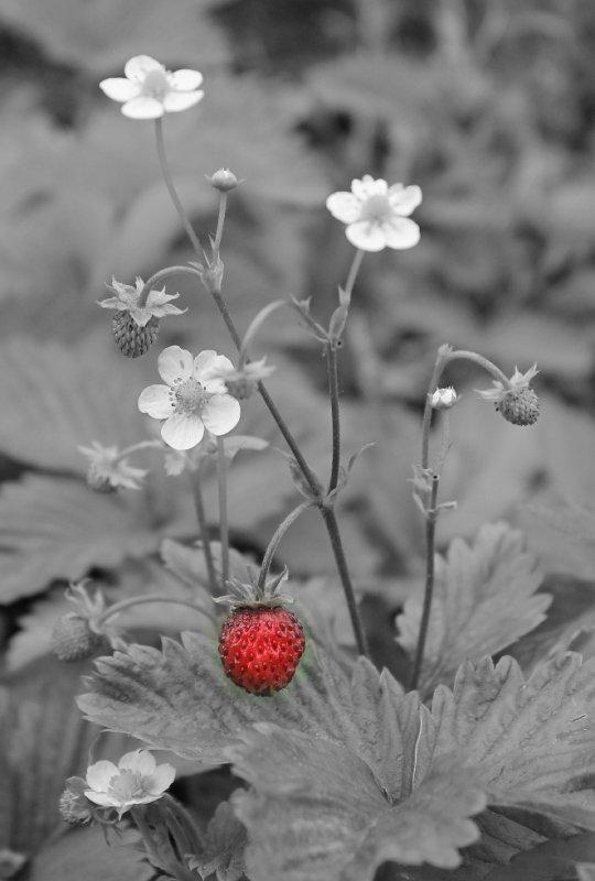 some strawberries?