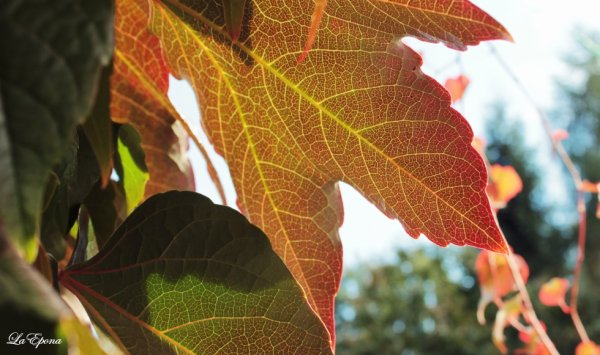 beautiful leafes