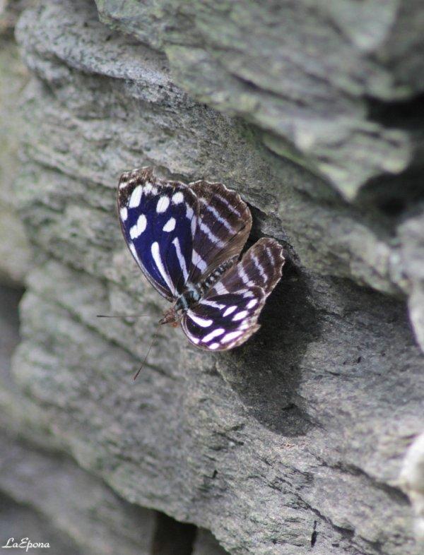 butterfly, butterfly..