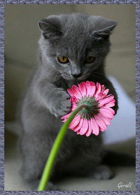 Prière du Chat.... Mais qui me Va bien... :)