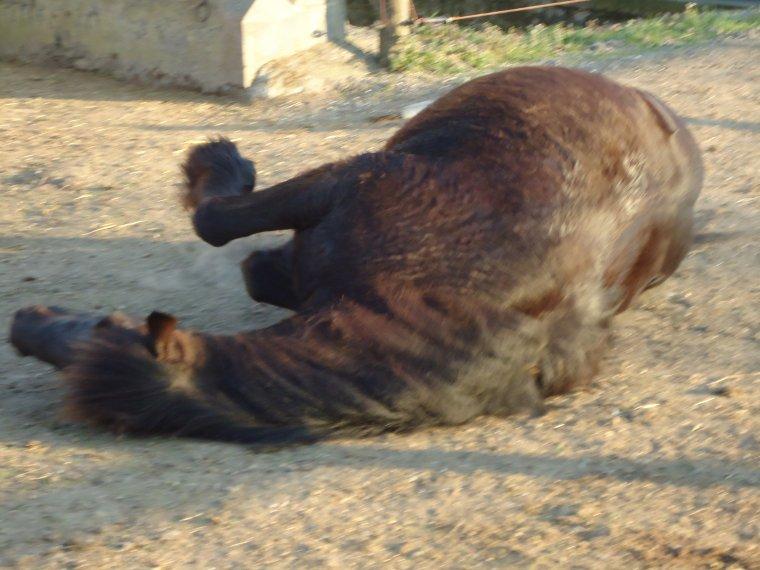 Est-ce que mon cheval est heureux...