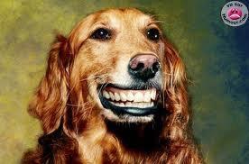 Envie d un sourire eblouissant de star comme dans la pub aquafresh formule blancheur????