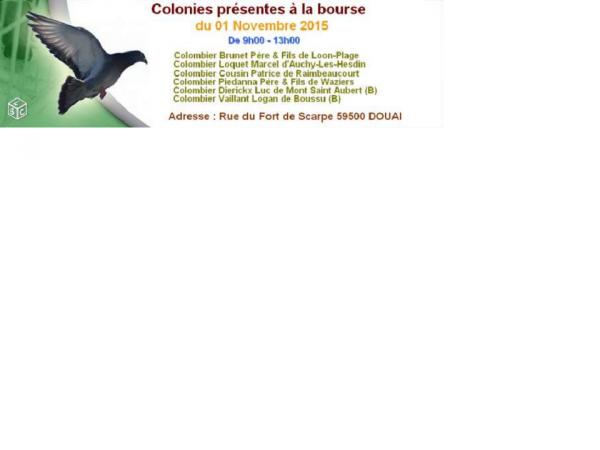 BOURSE AUX PIGEONS 2015 - 2016 DE DOUAI FRAIS MARAIS