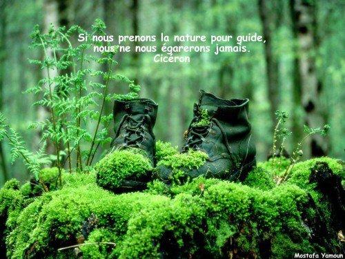 MERE NATURE ....