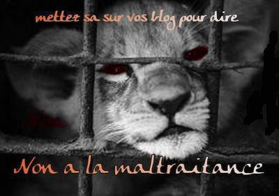 NON, A LA MALTRAITANCE DES ANIMAUX !