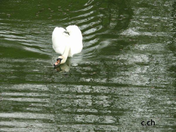 promenade au bord de l'eau
