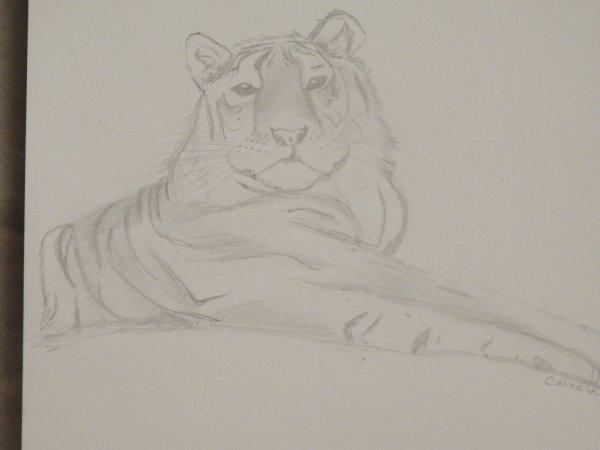 mon dessin tigre