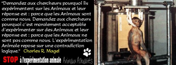 STOP VIVISECTION !