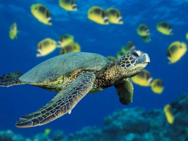 je nage...dans le...bonheur..♥