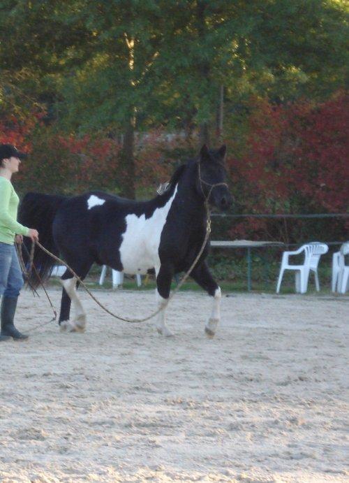 Magic Pony en mode on : Sultan s'éclate à La Cense!