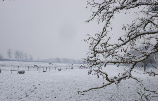 L'hiver arrive.... Il presse l'automne de nous quitter et revêt avec hâte son manteau immaculé.
