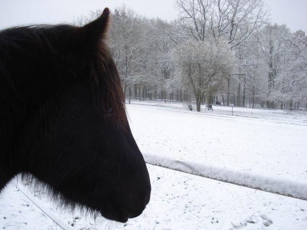 Sultan in the snow