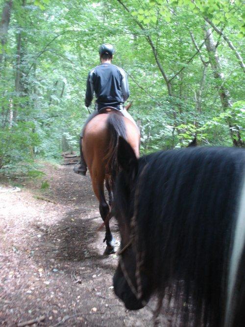 Ballade en forêt avec Tonton Marquis!