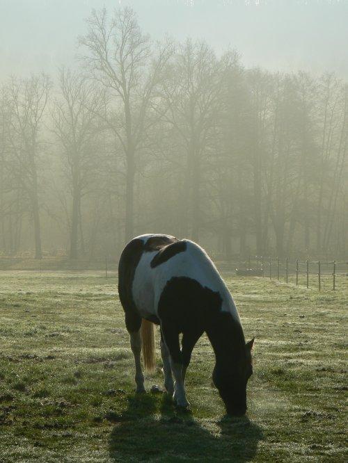 Le Haras de La Cense éblouissant dans son duvet brumeux. Sans doute le plus beau visage de l'hiver cette année.... Et une Super nouvelle!!!!