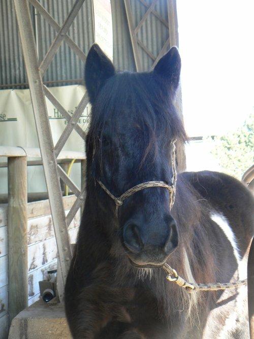 Massage à quatre mains pour Magic Pony, rien n'est trop beau pour Sultan!