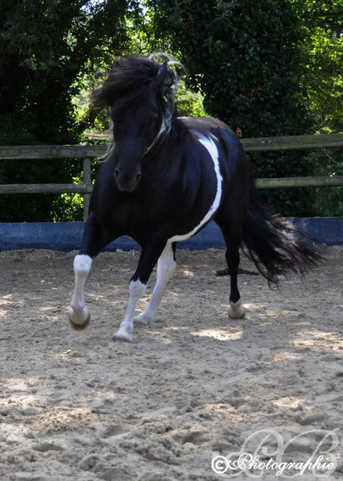 10 avril : Happy B-day mon Magic Pony!!!!!!