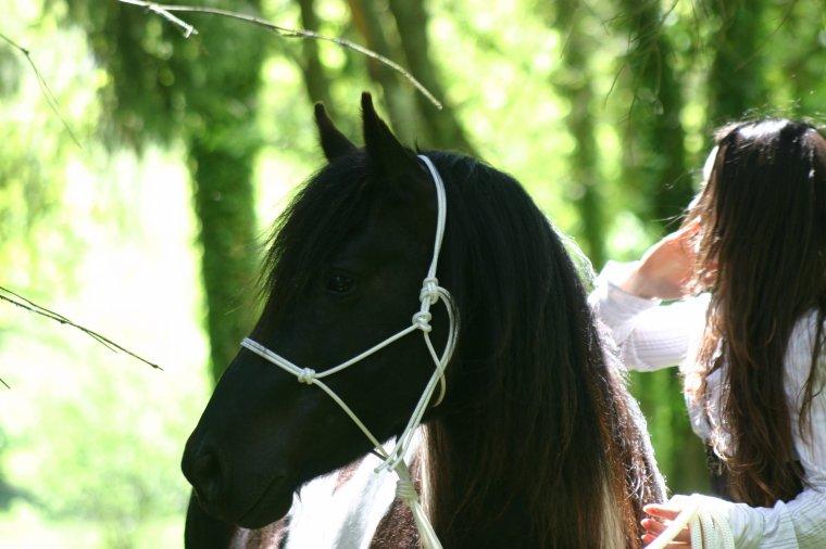 Horse&Ropes : Le site ouvre ses portes!