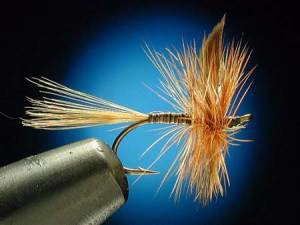 Les mouches: Ginger Quill