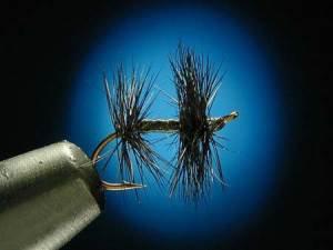 Les mouches: Knotted Midge