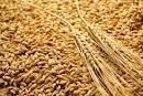Trucs et astuces : Au blé !