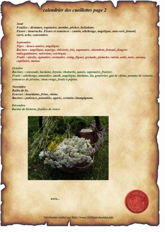 Calendrier des cueillettes des herbes